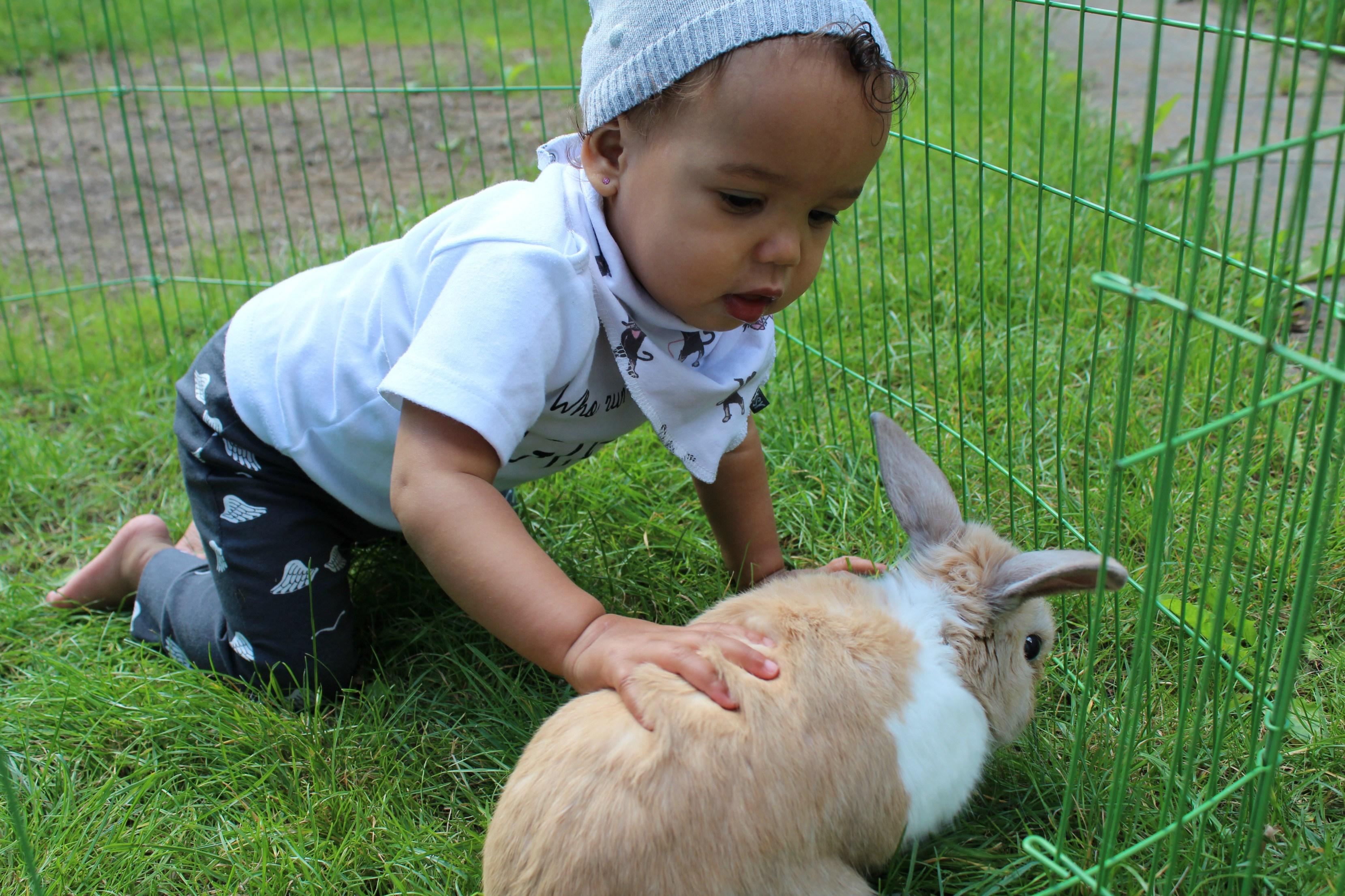 toen-was-mijn-konijn-dood_goodgirlscompany