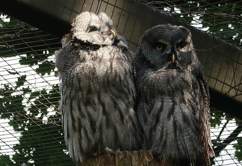 Dierentuin-Nordhorn-uilen toendra-GoodGirlsCompany